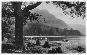 Derwentwater A Summer Day  Cattle, Abrahams' Series, Sincere Greetings