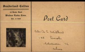 Windsor Locks CT Sunderland Collies Dog Breeder Advertising Postcard