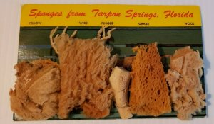 VTG Postcard 1960s real sponges from Tarpon Springs Florida dried unposted  488