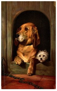 Dog ,2 dogs in dog house -Dignity and Impudence