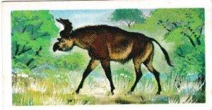 Trade Cards Brooke Bond Tea Prehistoric Animals No. 41 Sivatherium