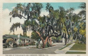 SEBRING , Florida, 1910-20s ; The Oaks at Pomegranate and Commerce