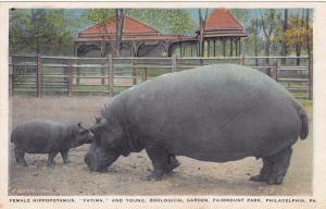PHILADELPHIA , Pennsylvania , PU-1925 ; Female Hippopotamus , Fairmount Park