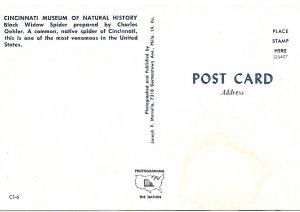 Black Widow Spider Cincinnati Ohio Museum Natural History Postcard PCBT4-53021