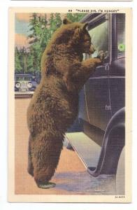 Begging Bear at Car Window 1939 Vintage Linen Postcard