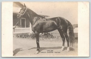 Real Photo Postcard~Harness Race Horse Uhlan~World Champion Trotter~c1912 RPPC