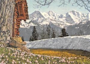 Switzerland Eiger Monch und Jungfrau