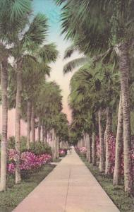 Florida Palm Beach Palmetto Walk Albertype