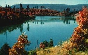Lake Britton, California, CA, Unused Chrome Vintage Postcard g7484