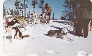 Hudson Bay Company Dogs , Canada , 50-60s