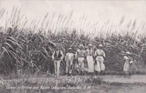 Barbados Sugar Cane Field Canes In Arrow & Native Labourers