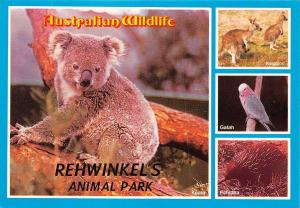 Australia Australian Wildlife Rehwinkel's Animal Park Koala Kangaroo Galah