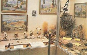 Postcard Skull and Animal Exhibit Field House of Natural History Vernal Utah