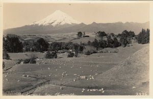 RP: NEW PLYMOUTH, New Zealand, 1910-20s; Mt. Egmont, Sheep in the fields below