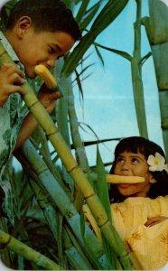 Hawaii Honolulu The C & H Sugar Kids In A Sugar Cane Field