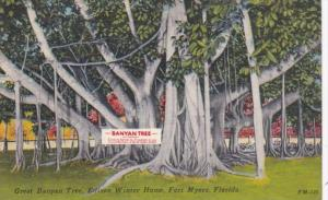 Florida Fort Myers Great Banyan Tree At Edison Winter Home