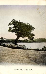 NH - Meredith. The Old Oak on the shore of Lake Winnipesaukee