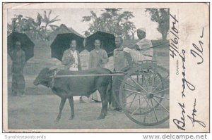 Bullock Race Cart Colombo Ceylon 1904