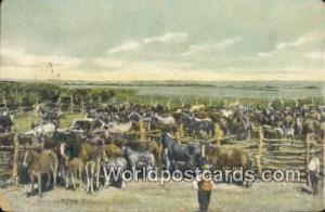 Canada, du Canada Horses on a Ranch  Horses on a Ranch