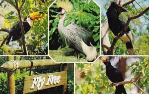 Florida Cypress Gardens Fly Free A 15,000 Square Foot Enclosed Aviary Some 40...