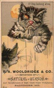 1880s-90s Cat's on Fence O! Stop Looking at Me R.A. Wooldridge & Co. Trade Card