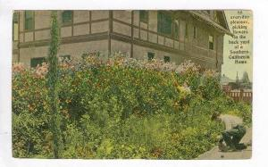 An everyday Peasure picking flowers in the Back Yard in Southern California, ...
