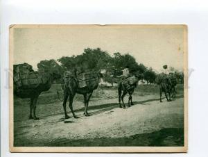 271320 TURKMENISTAN Ashgabat caravan camels Vintage postcard