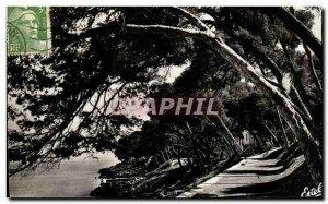 Old Postcard Menton The Pronienade Du Cap Martin