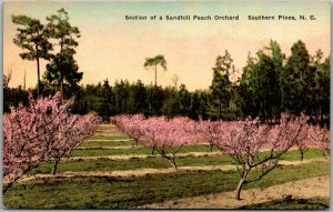 1931 Southern Pines NC Postcard Sandhill Peach Orchard HAND-COLORED Albertype