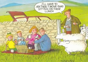 Eating A Picnic On Sheep Manure Farmer Arrives Comic Humour Postcard
