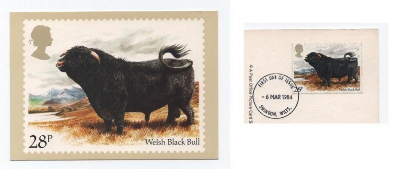 POSTCARD STAMP POSTMARK WELSH BLACK BULL BULLS OX OXEN COW COWS UK ENGLAND 84