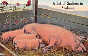 A LOT OF SUCKERS IN SPOKANE WASHINGTON-PIGLETS & SOW PIG POSTCARD