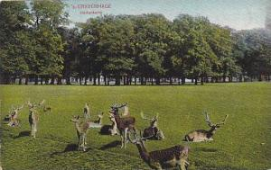 Deers, Hertenkamp, 's-Gravenhage (South Holland), Netherlands, 1900-1910s