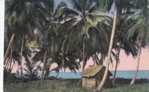 COSTA RICA , 00-10s : Coconuts groves along the Caribean Sea