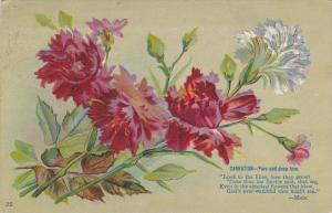Language of Flowers :  Carnation = Pure & Deep Love, PU-1910