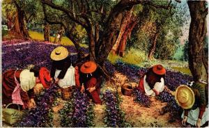 CPA AK La Cote d'Azur - La cueillette des Violettes (513954)