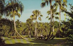 Florida Sarasota jungle Gardens