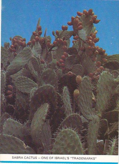 Israel Sabra Cactus One Of Israel's Trademarks