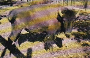 Indiana Bloomingdale Buffalo At Gobblers Knob Zoo Farm
