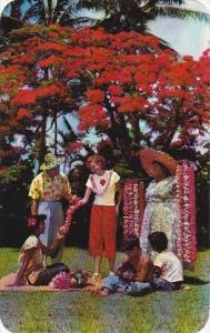 Hawaii Honolulu Lei Seller And Helpers Beneath A Magnificent Royal Poinciana ...