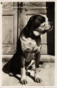CPA AK St.Bernard DOGS (729361)