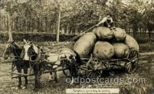 Exaggeration Postcard Post Card Photo by Wm. H. Martin Postcards Potatoes in ...