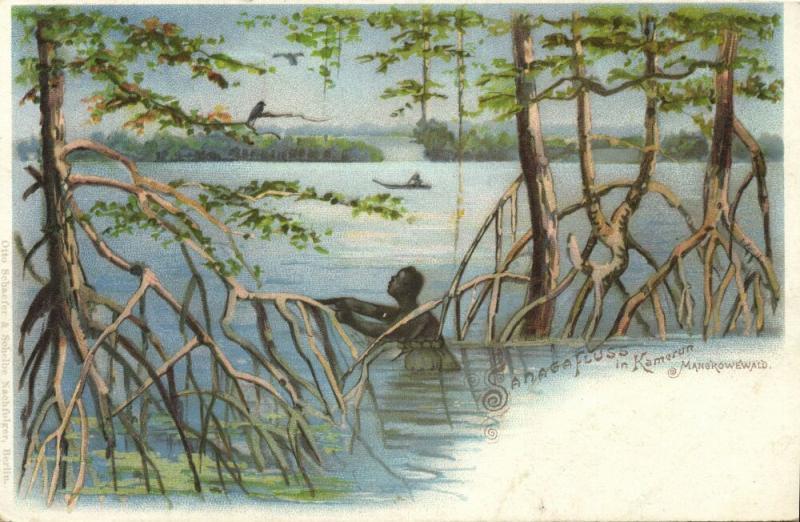 german west africa, CAMEROON, Sanaga River, Mangrove Forest (1899)