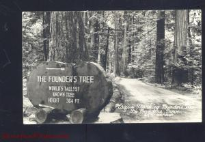 RPPC FOUNDERS GROVE CALIFORNIA HUGE REDWOOD TREE REAL PHOTO