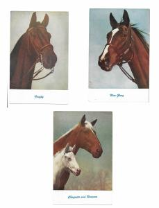 Thoroughbred Race Horses War Glory Chaquita Ramona Firefly 3 Vintage Postcards