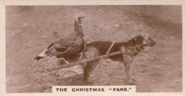Hen Birds Piggy Back Cart Old Dog German Photo Dogs Cigarette Card
