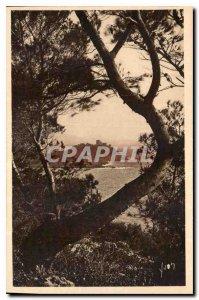 Postcard Old French Riviera Cap Ferrat seen through the Aleppo Pines