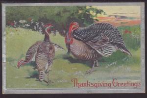 Thanksgiving Greetings,Turkeys Postcard