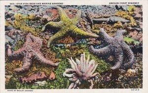Star Fish Beds And Marine Gardens Oregon Coast Highway Portland Oregon