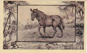 M J Mintz Animal Series The Guagga